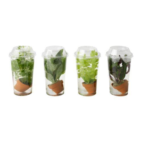 VATTENRALL Wasserpflanze IKEA Fr Aquarien Oder Die Vase