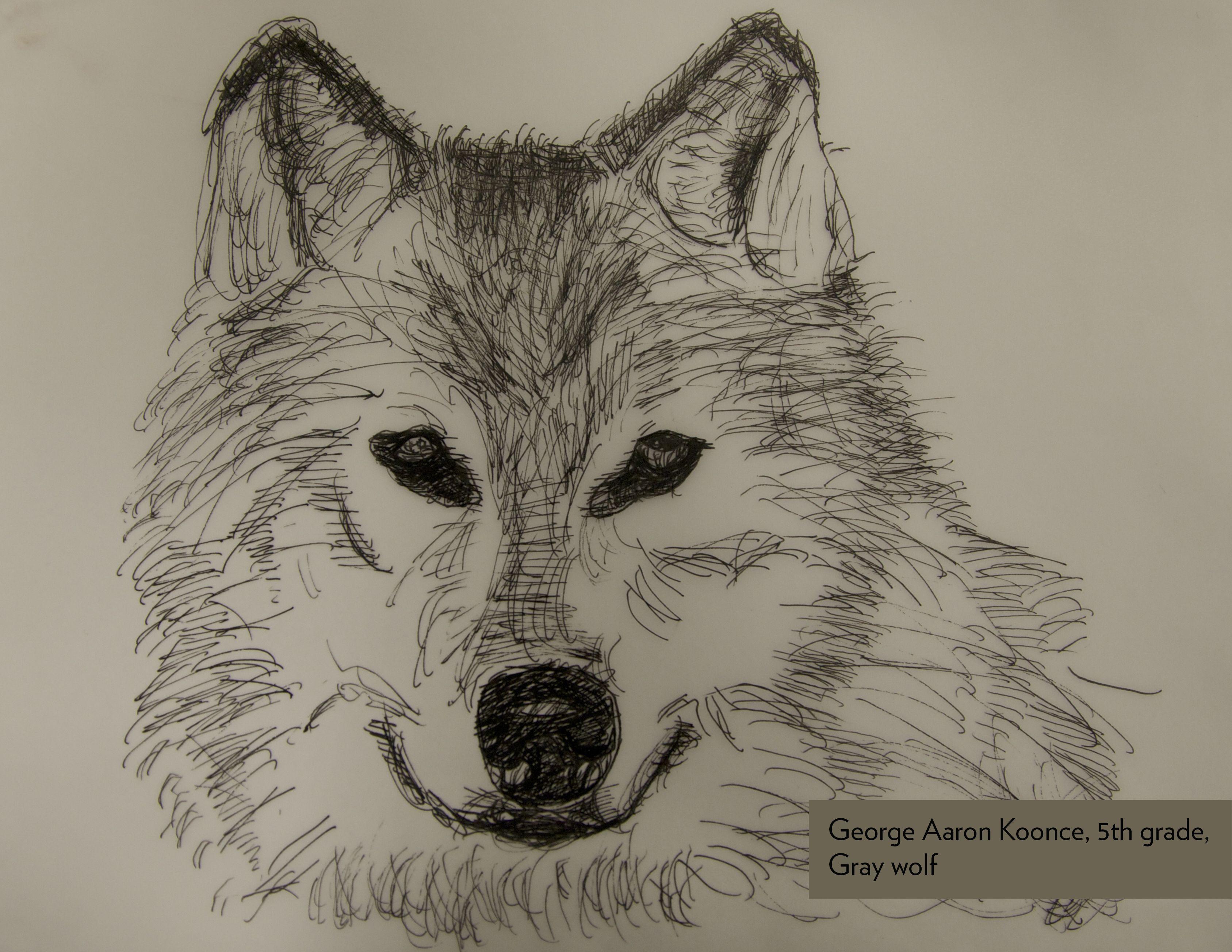 Art Contest Semifinalist Grades 3 5 Gray Wolf George