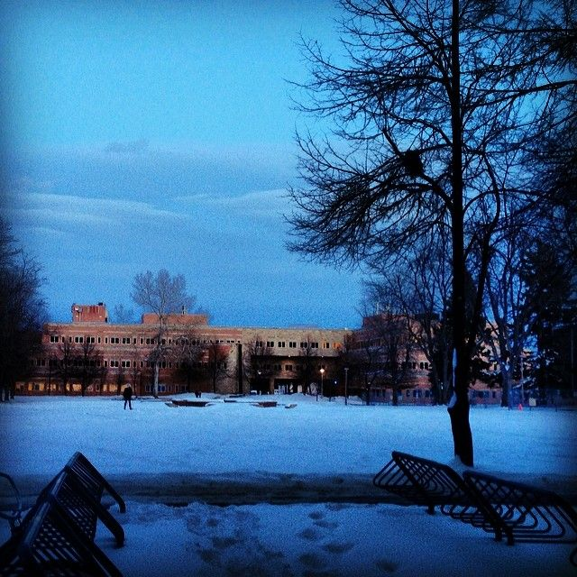 Warner College loves this campus. Winter nights at CSU are beautiful and majestic. #nature