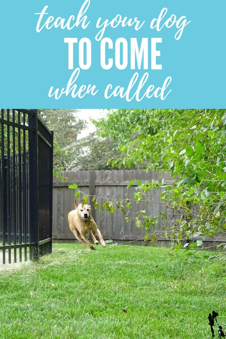 Teach Your Dog To Come When Called With These Easy Steps It S The