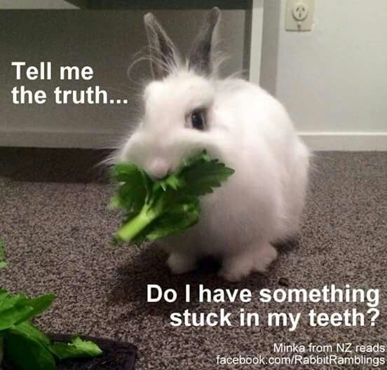 Pin by camila segura on cute pinterest here are some memes that have been found around the internet and perhaps been featured in a rabbit ramb sciox Image collections
