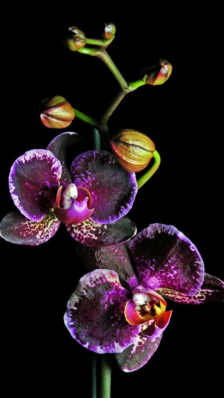 Pin Van 𝓙𝓪𝔁 𝓪𝓷𝓭 𝓐𝓷𝓷𝓮 Op Orhideak Orchideeen Bloemen Vetplanten