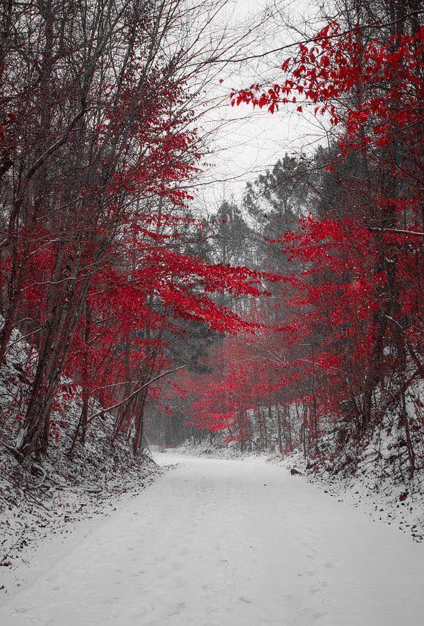 Landscape Nature Winter Forest