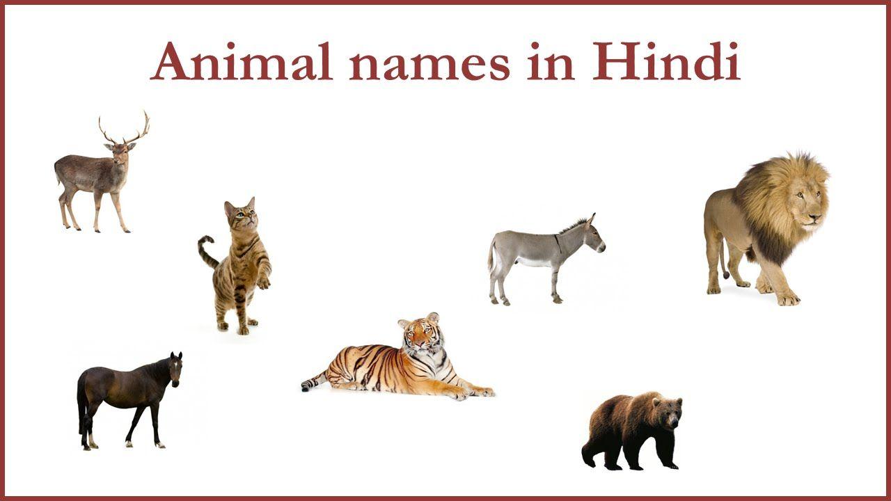 Animal Names In Hindi Animals Hindi Moose Art