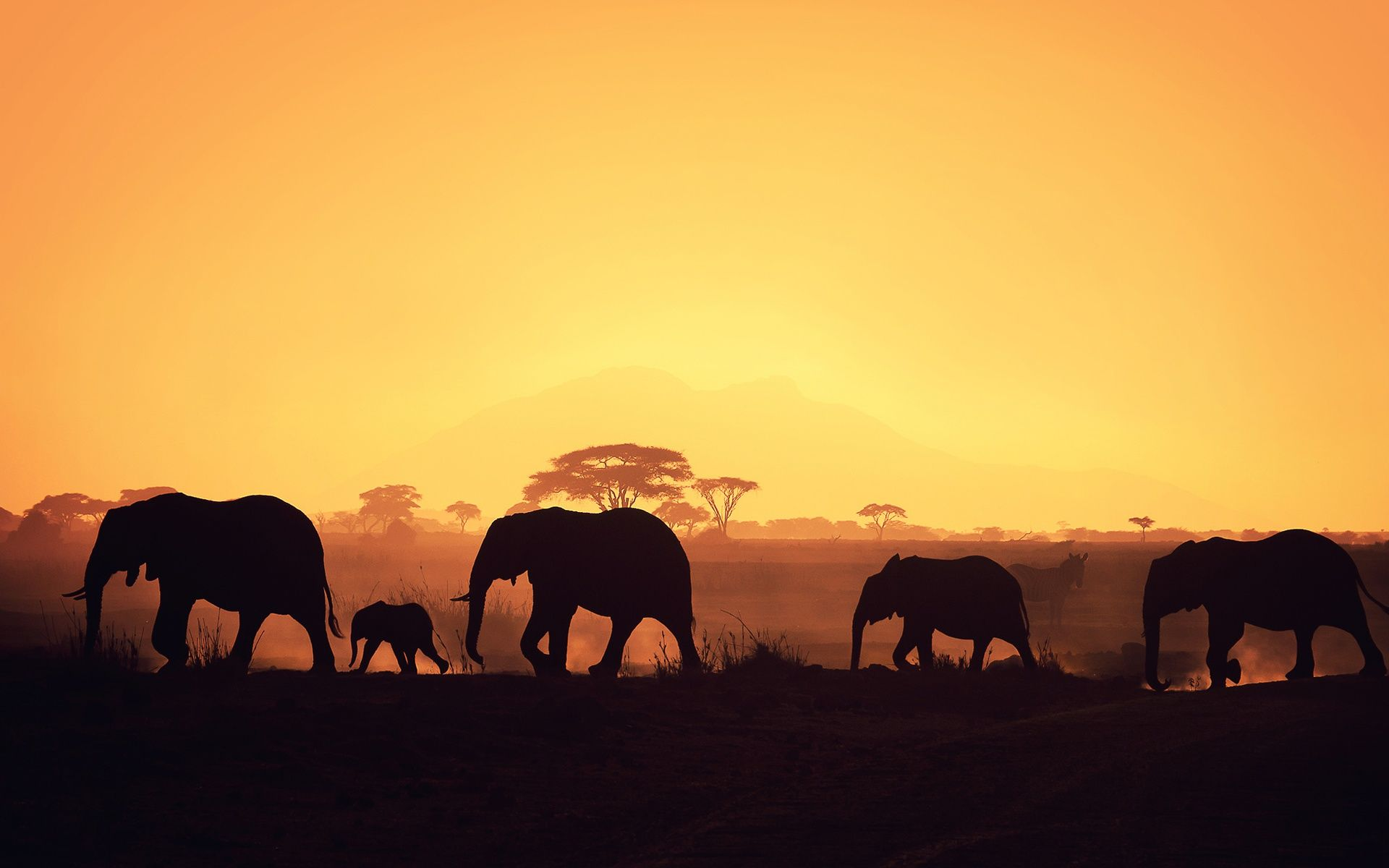 Full Hd P Africa Wallpapers Hd Desktop Backgrounds X Africa Silhouette Elephant Wallpaper African Elephant