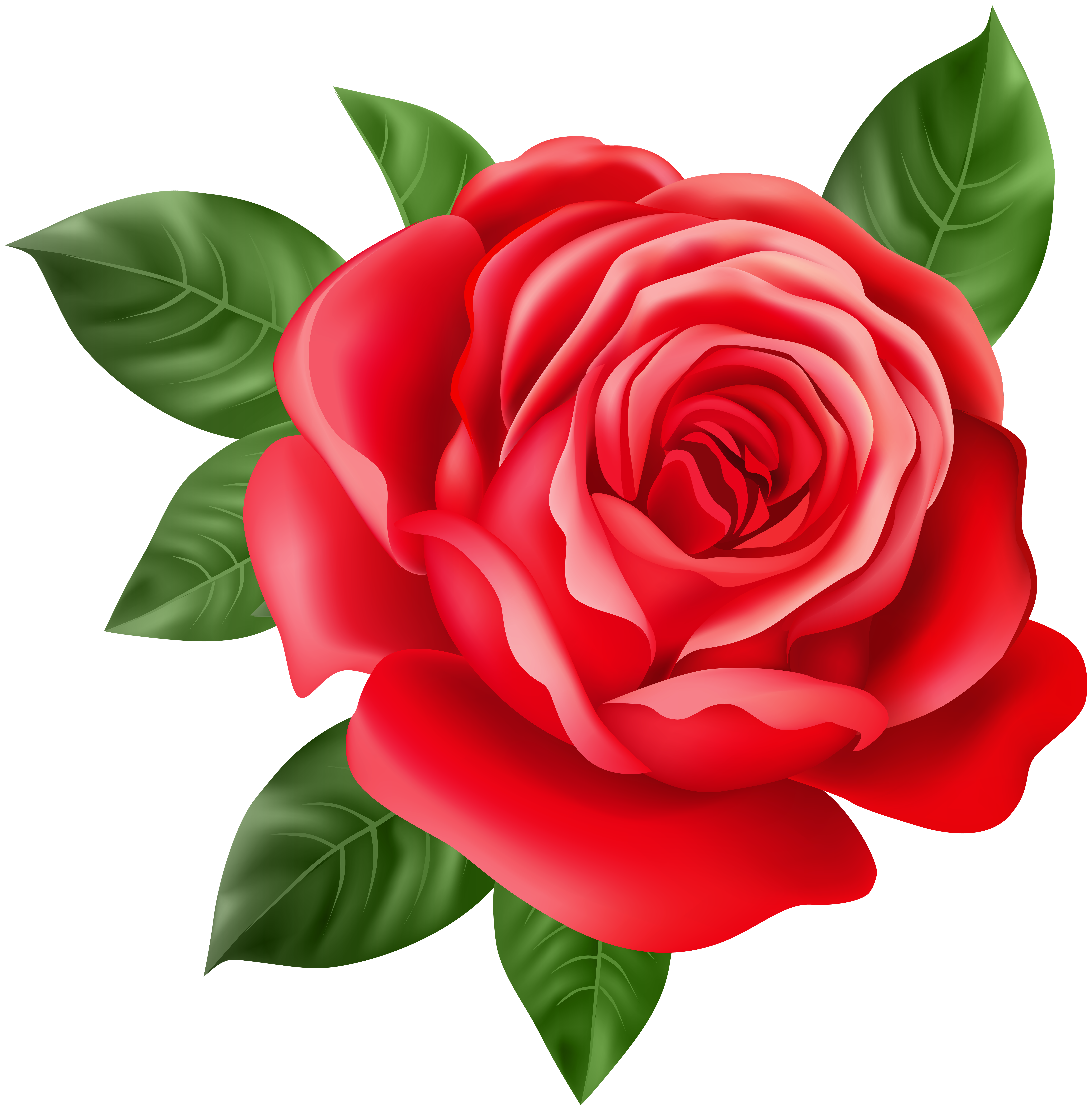 Red Rose Transparent Png Clip Art Gallery Yopriceville High Quality Images And Transparent Beautiful Flower Drawings Rose Flower Wallpaper Flower Clipart