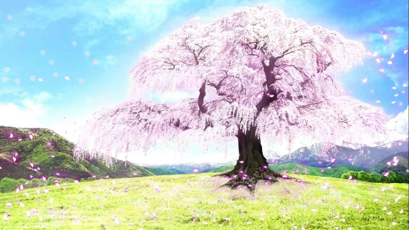さくら 咲きました 一本桜 アニメの風景 美しい風景 カワイイ背景