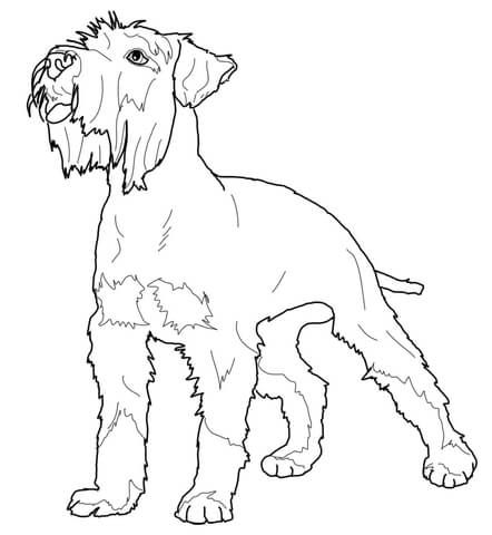 Miniature Schnauzer Coloring Page Horse Coloring Pages Dog
