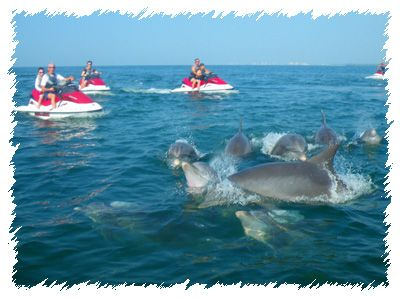 Myrtle Beach Jet Ski Als Dolphin Tours Jetski Fishing