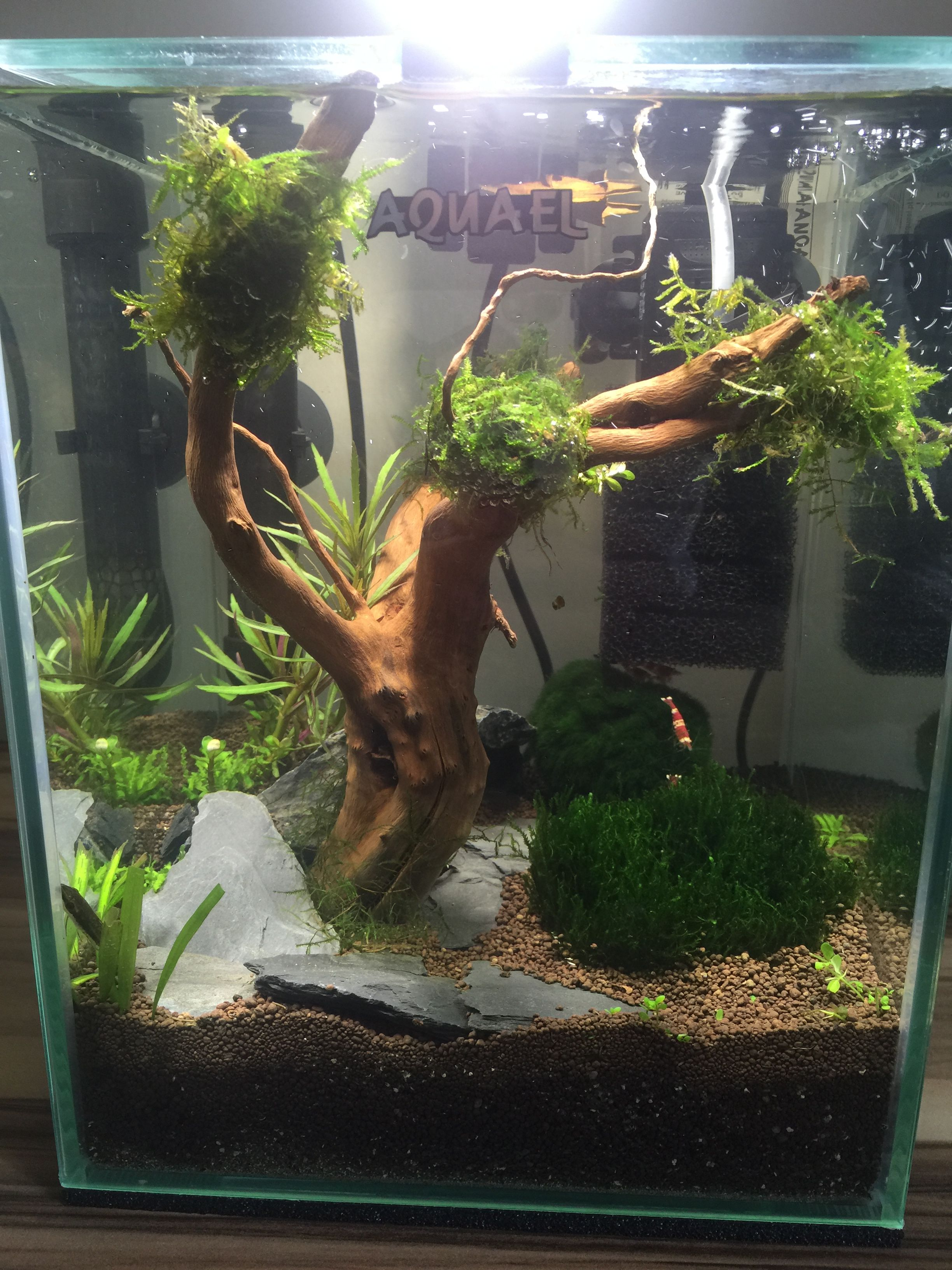 Fish Tanks Aquael 10L Shrimp Tank