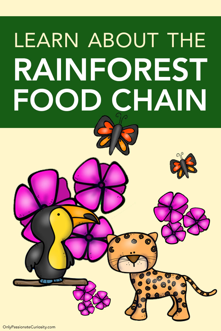 Learn About the Rainforest Food Chain in 2020 Rainforest