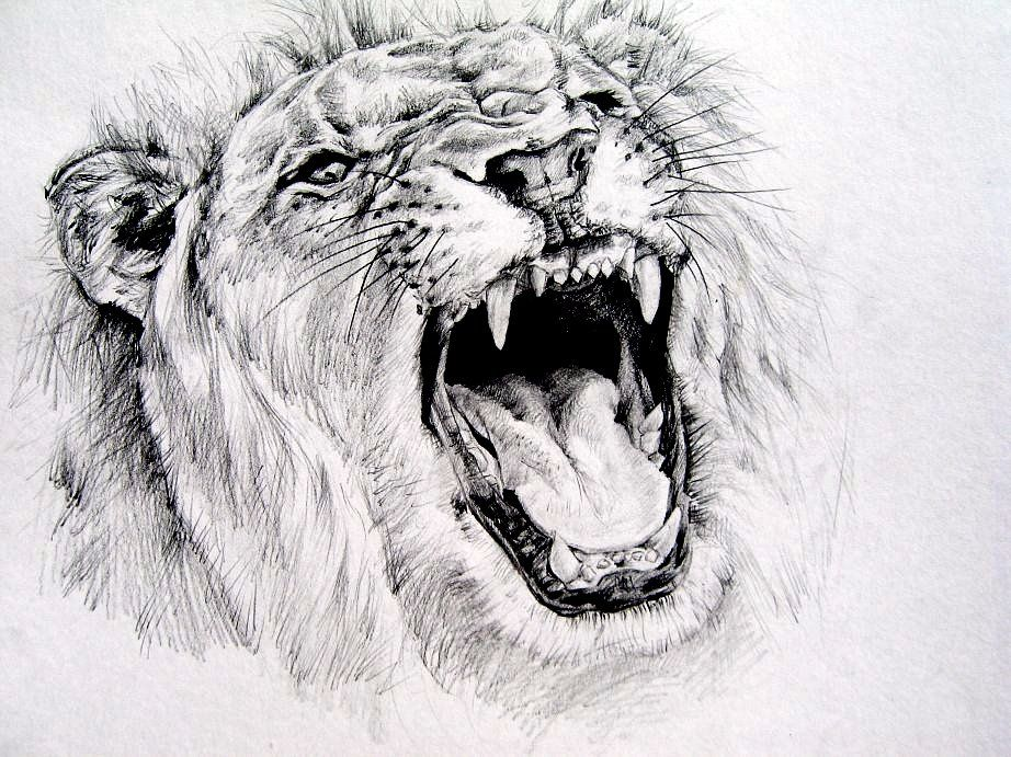 Image result for Drawn pictures of a snarling lion