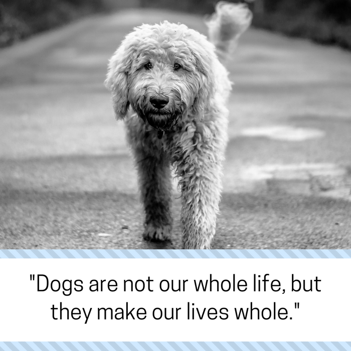 30 Powerful Quotes About Losing A Dog Dealing With Grief