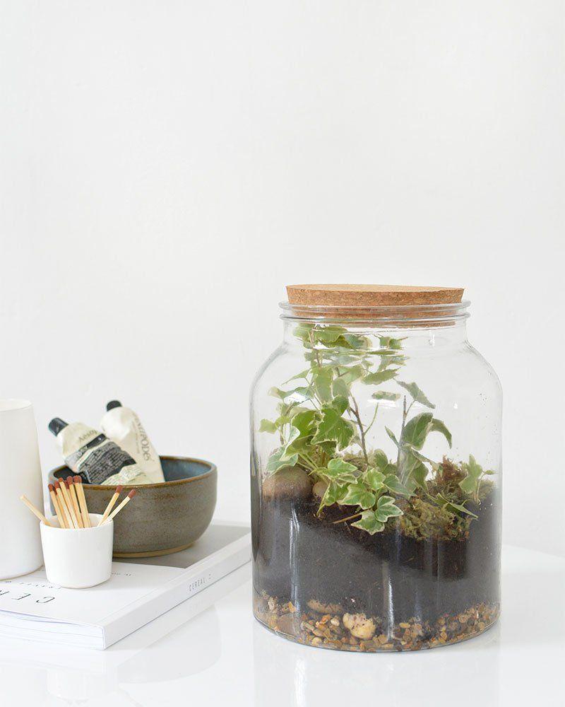Terrarium Fermé Plante Grasse terrarium : 12 idées pour le faire soi même | terrarium