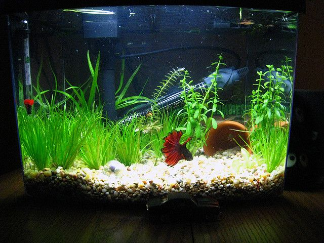 Nice little planted setup for a betta love the grass for 38 gallon fish tank