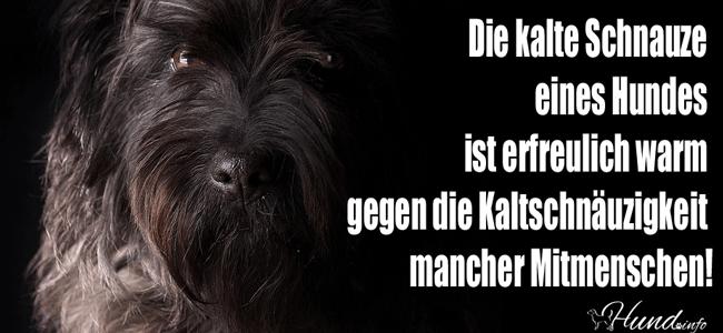 Schönes Zitat: Die Kalte Schnauze Eines Hundes Ist Erfreulich Warm Gegen  Die Kaltschnäuzigkeit Mancher Mitmenschen.
