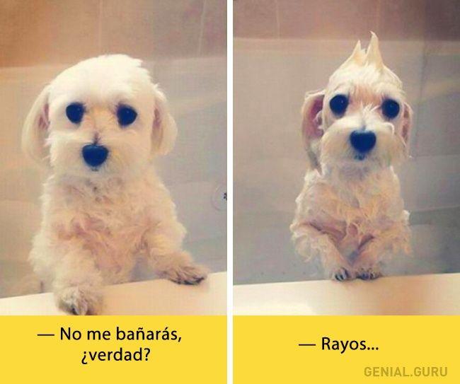 App Para Hacer Memes Memes Chistes Chistesmalos Imagenesgraciosas Humor Baby Dogs Animals Cute Animals