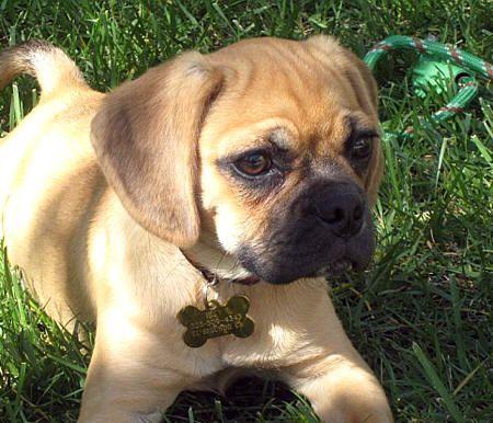 3rd dog-Daisy