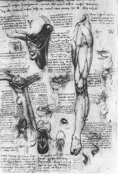 """""""Gli studi anatomici (laringe e la gamba)"""", inchiostro di Leonardo Da Vinci (1452-1519, Italy)"""