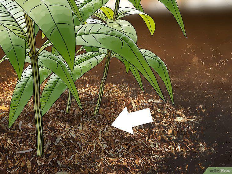 Get rid of millipedes verbena plant plant leaves verbena