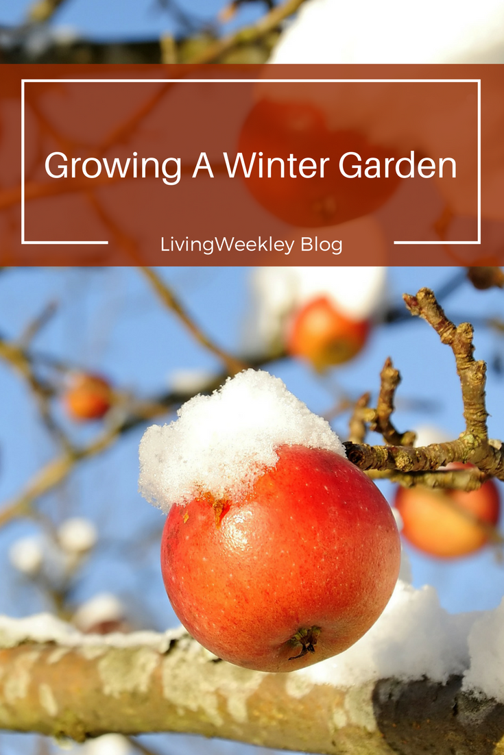when you think of gardening winter isn u0027t the first season to come