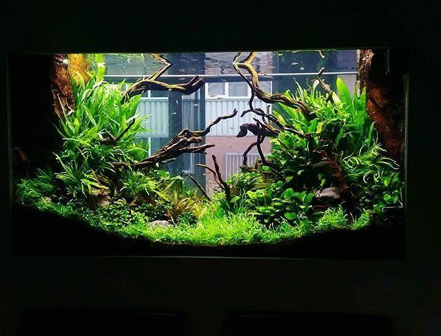 Image Result For Tropical Aquascape Aquarium Amazing Aquariums Tropical Fish Tanks