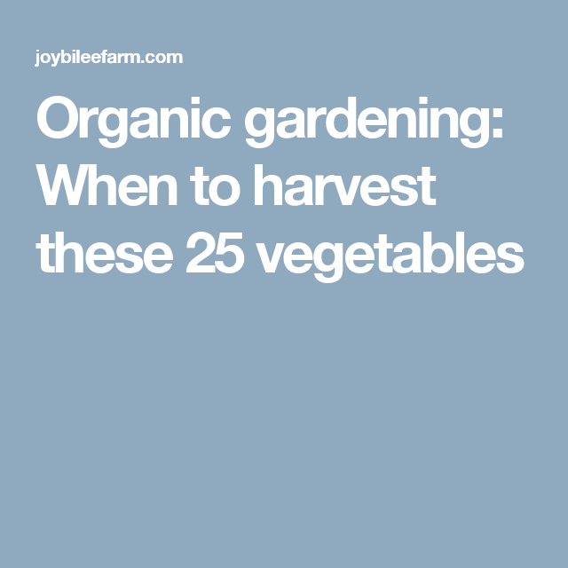 Organic gardening: When to harvest these 25 vegetables