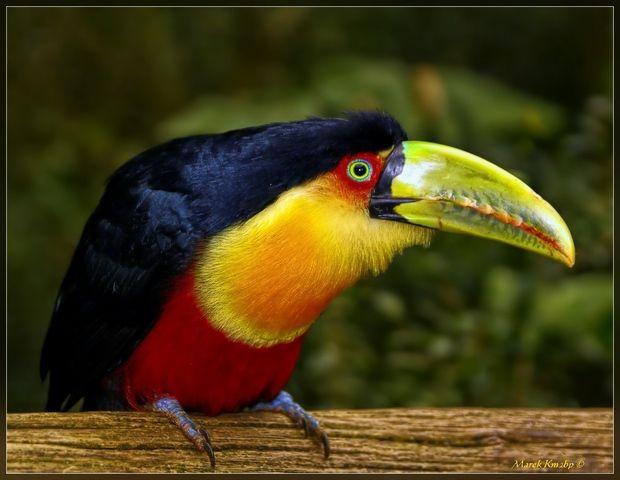 Animals in Foz do Iguacu Brazil precise location place map here