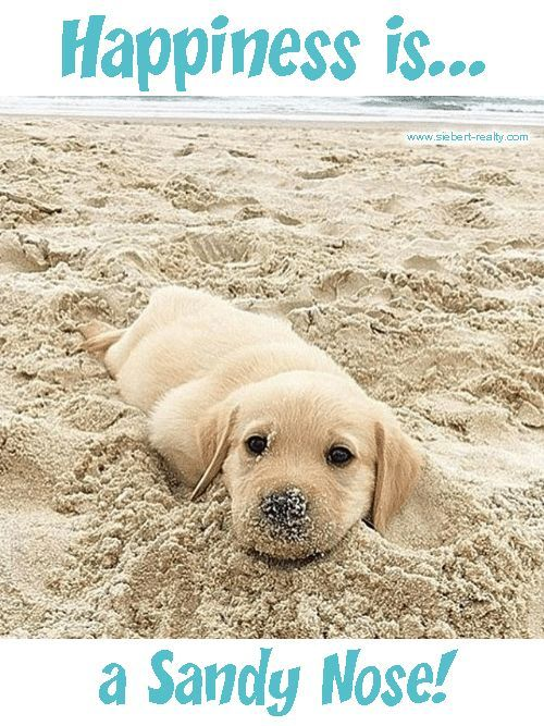 Happiness Is A Sandy Nose So True Sandynose Puppylove