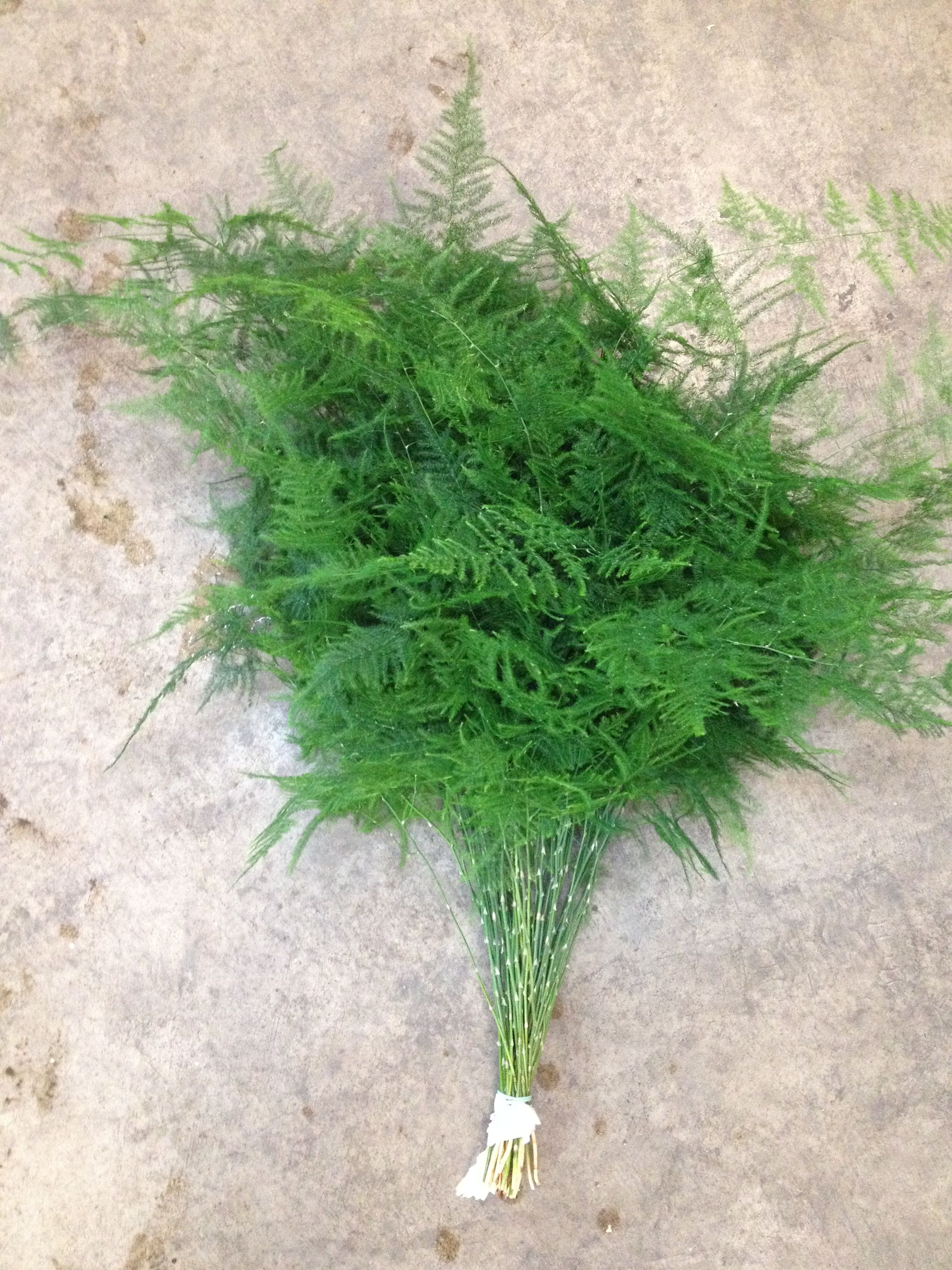 Wholesale Flowers For Weddings And Events Asparagus Fern Types Of Flowers July Wedding Flowers