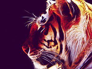 Imagen de un hermoso tigre