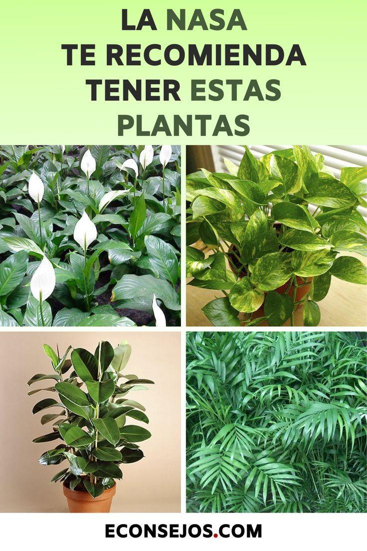 5 especies de plantas que la NASA recomienda tener en casa