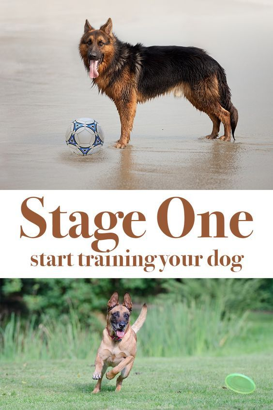 Stage One Is The Very First Stage In Dog Training This Is The