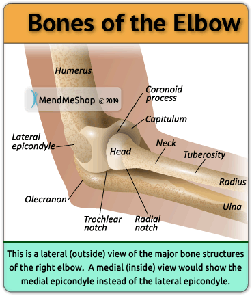 The Elbow Is Made Up Of A Simple Hinge Joint That Connects The Upper Arm Bone Humerus To The Forearm Bones The Radius A Elbow Anatomy Joints Anatomy Anatomy
