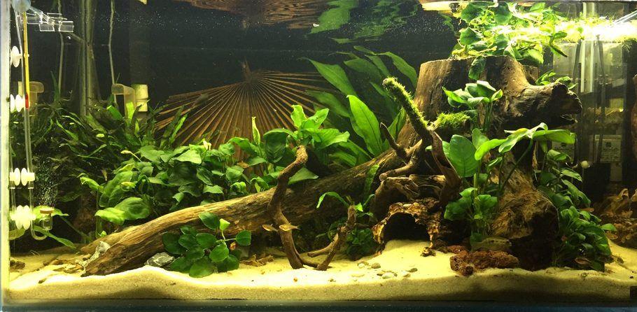 My West African Fresh Water Fish Tank Biotope Aquarium Fish Tank