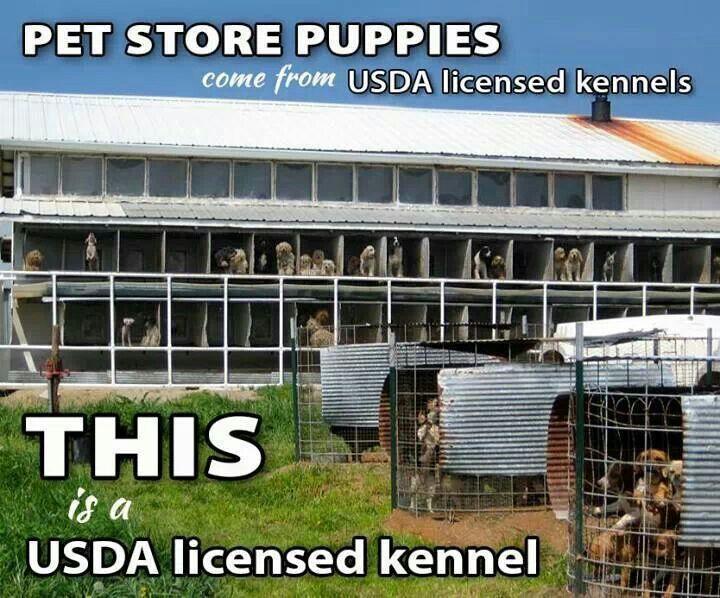 Usda licensed kennels puppy mills pet store