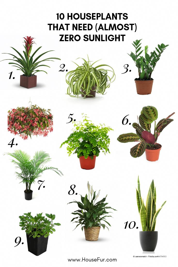 10 Houseplants That Need (Almost) Zero Sunlight (With