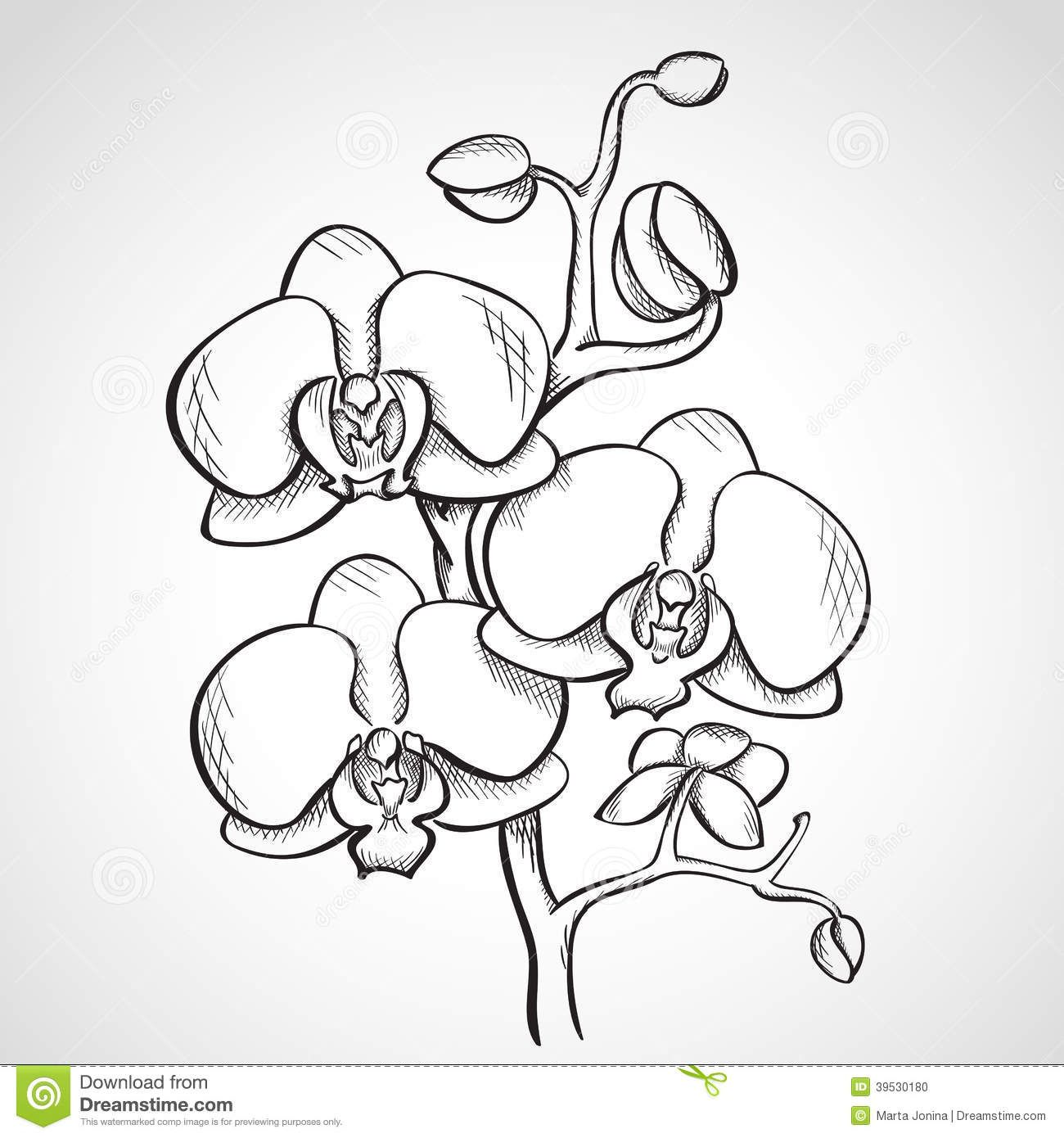 Sketch Orchid Branch Download From Over 63 Million High Quality Stock Photos Images Vectors Sign Up For Orchid Drawing Orchids Painting How To Draw Hands