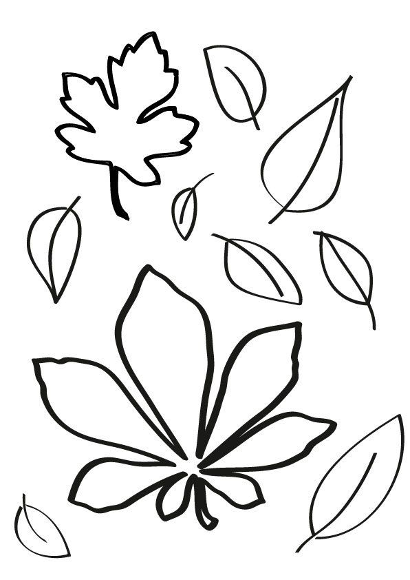 Schneckelinchen erklärt Darum werden die Blätter im