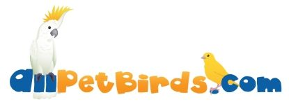 Easy Pet Bird And Parrot Characteristics Comparison Chart Pet Birds Parrots Pet Birds Easy Pets