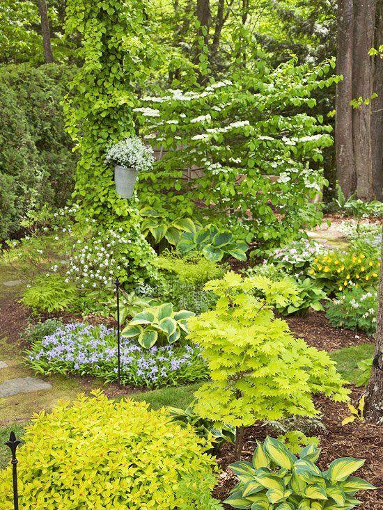 Schatten Garten - Pflanzenarten SchattenGarten Pinterest - vorgarten anlegen nordseite