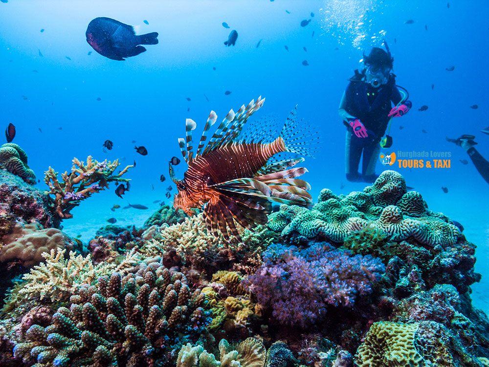 Things To Do In Hurghada Egypt Top 10 Hurghada Excursions Lion Fish Hurghada Egypt Hurghada