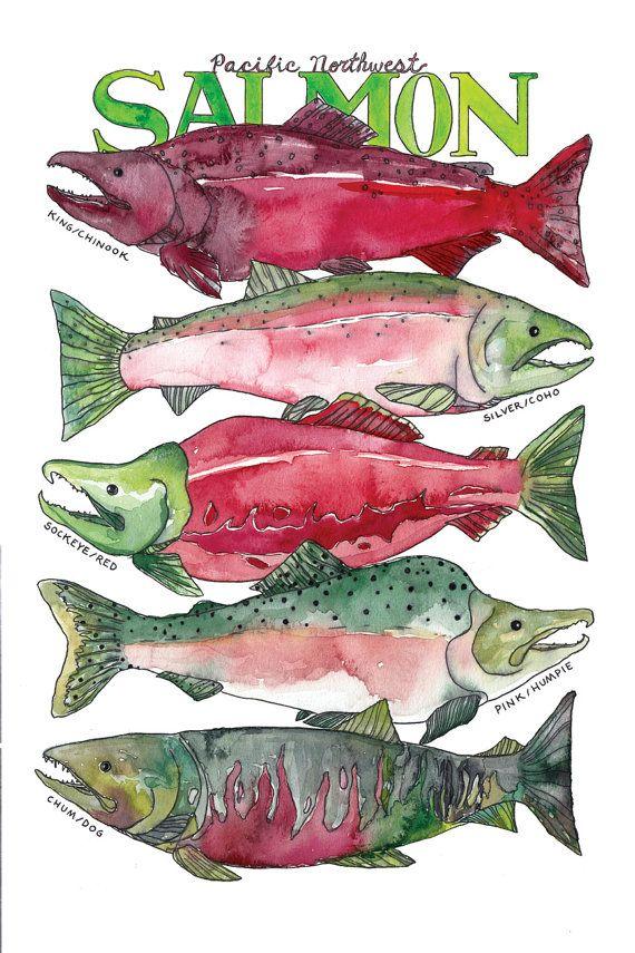 Pacific Northwest Salmon Watercolor Art Print / West Coast Sea Life Illustration