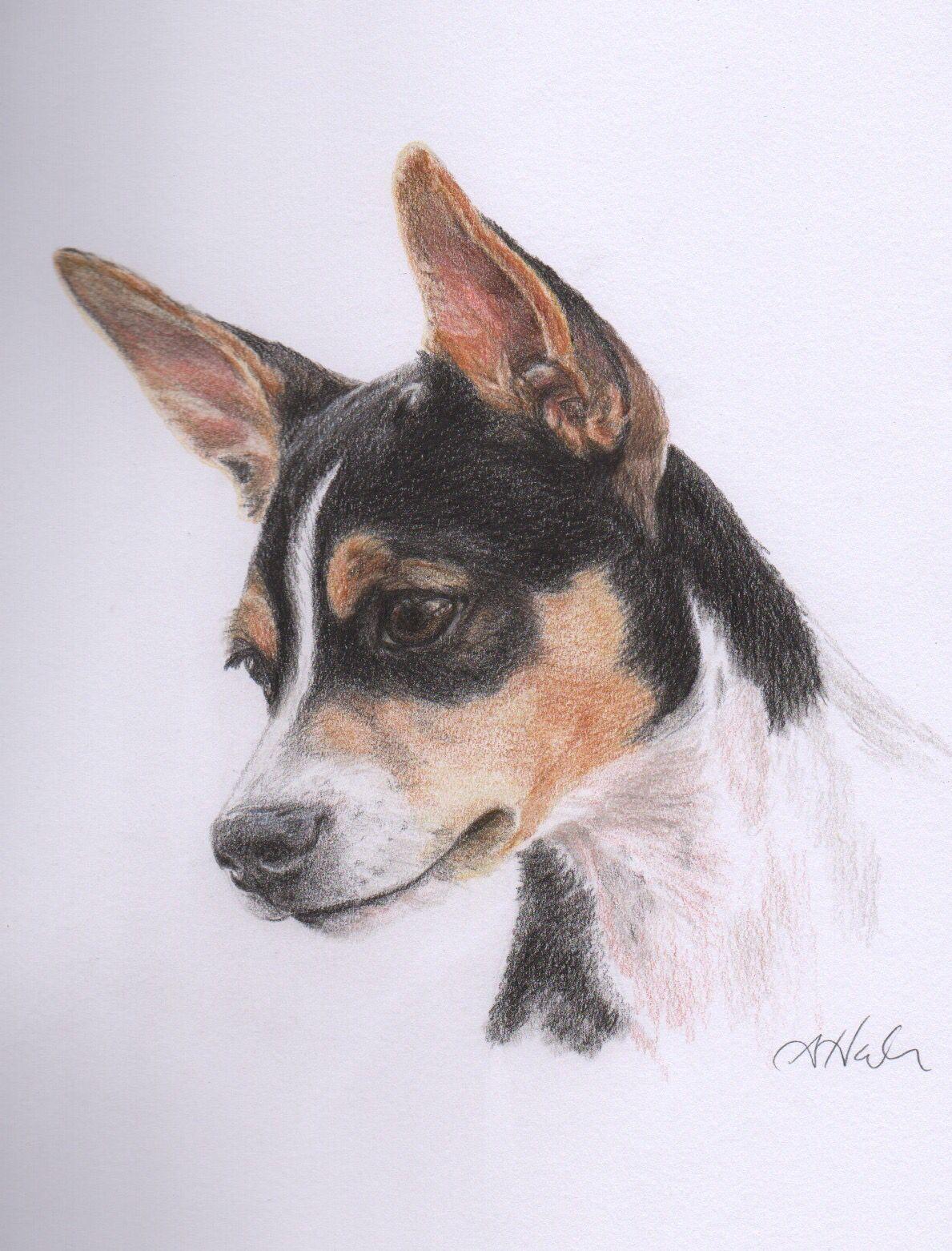 Rat Terrier Www Facebook Com Yowyowtails Rat Terrier Art Rat