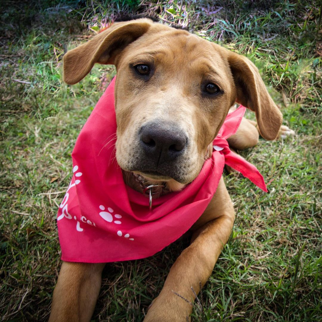 Adopt Honeybee on Lucky puppy, Animal rescue, Adoption