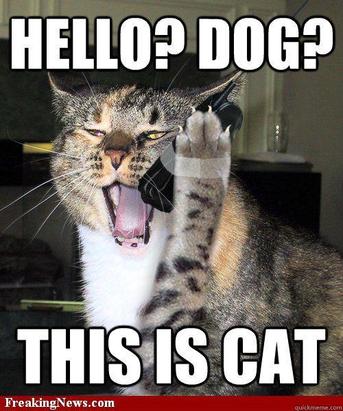 Funny Meme Hello : Dog on phone meme hello this is cat