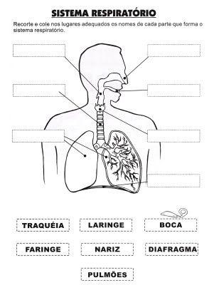 sistema respiratório | CIENCIAS NATURALES | Pinterest | Ciencia ...