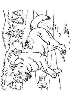 Coloriage Loup Dans La Foret.Coloriage D Un Grand Loup Courant Dans La Foret Animals And Pets