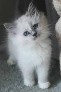 So Fluffy Cute Cats Kittens Cutest Cute Animals