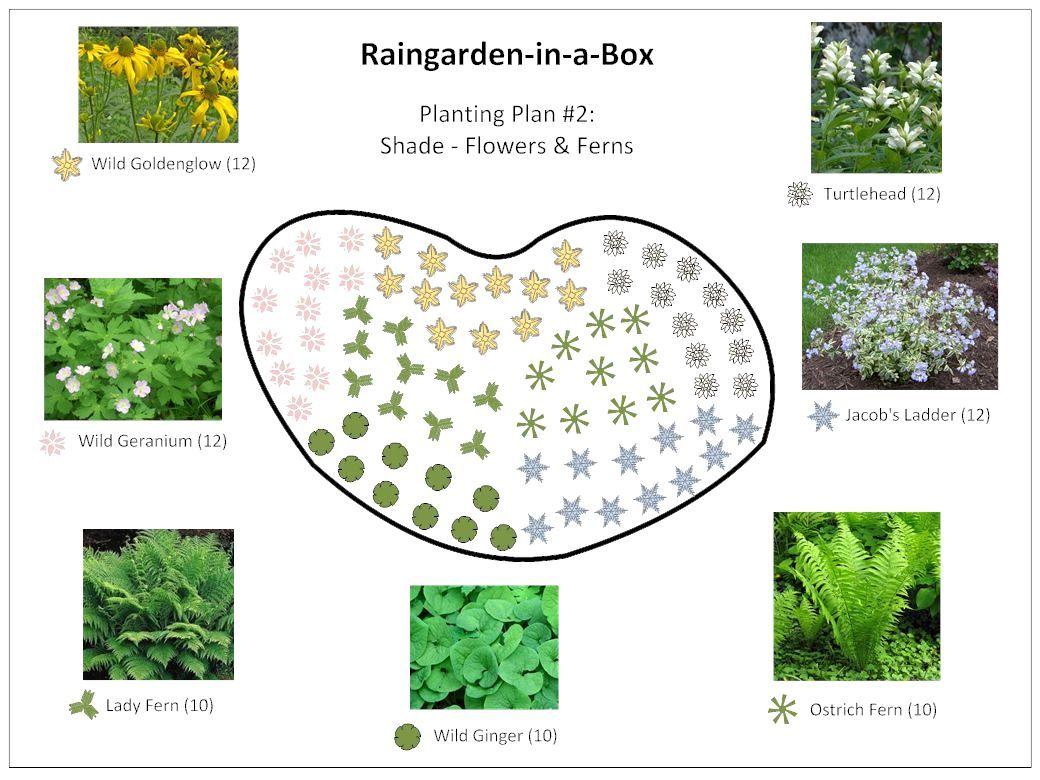 Rain Garden Design Plant Layout Rain Garden In A Box Prior